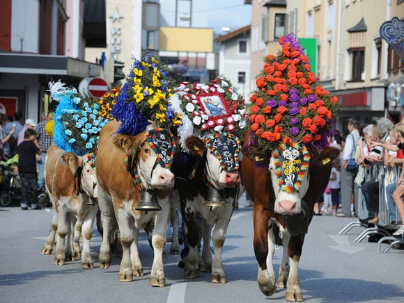 Cattle Drive Kufstein 20th of September 2014